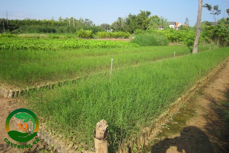 PHI LAO